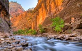 Обои деревья, река, камни, скалы, каньон, ущелье, Zion National Park
