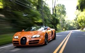 Обои Roadster, Bugatti, Veyron, supercar, road, speed, orange
