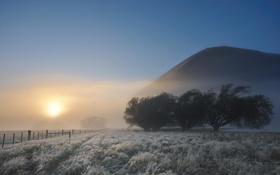 Картинка иней, солнце, деревья, пейзаж, природа, туман, забор
