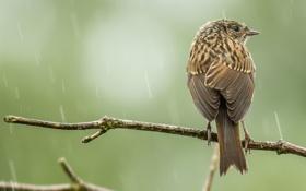 Картинка ветки, фон, дождь, птица