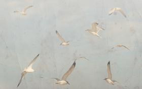 Картинка фон, небо, птицы