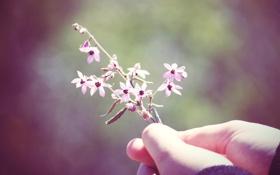 Обои цветок, макро, настроение, растение, рука, colours, macro