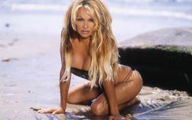 hot-babe,Pamela_Anderson,море обои
