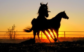 Обои закат, кони, вечер