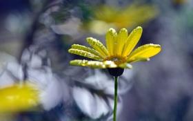 Обои капли, цветок, лепестки
