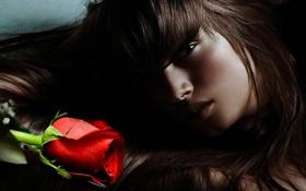Обои роза, Девушка, лицо, взгляд