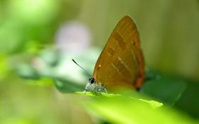 Обои листья, бабочка, размытость