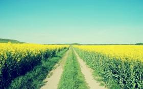 Обои поле, небо, дорога, цветы
