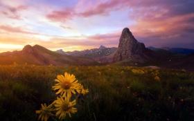 Картинка закат, цветы, горы