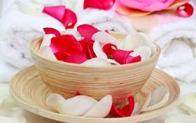 Обои роза, чашка, лепестки, блюдце