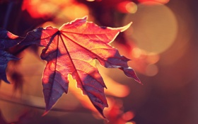 Картинка осень, солнце, макро, свет, красный, природа, лист