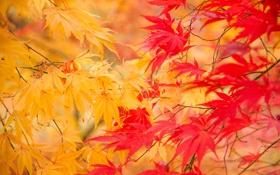 Обои желтые, листья, веточки, осень, природа