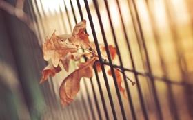 Картинка листья, ограда, забор, листок
