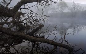 Обои деревья, озеро, коряги, туман