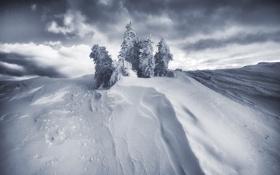 Обои снег, сугроб, ёлки