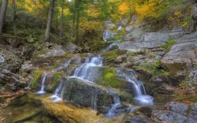 Картинка каскад, лес, река, поток, осень, скала, деревья