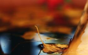 Обои опавший, осень, лист, лужа, боке