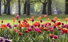 Обои цветы, парк, Германия, тюльпаны, клумба, Баден-Вюртемберг, Баден-Баден