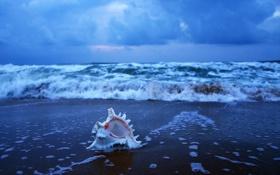 Картинка India, Early morning at sea beach, Puri, Orissa