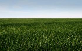 Обои поле, небо, трава, макро, природа, пейзажи, поля
