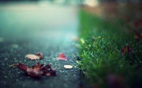 Обои дорога, трава, лит