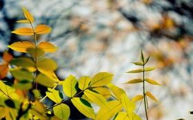 Картинка осень, листья, цвета, макро, ветки, природа, фон