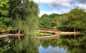 Картинка вода, деревья, мост, пруд, парк, отражение