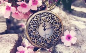 Обои цветы, стрелки, часы, лепестки