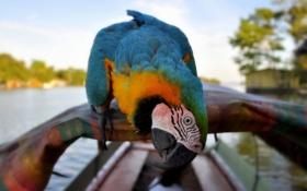 Обои раскраска, птица, размытость, попугай, клюв, природа, лодка