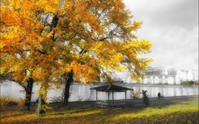 Картинка осень, пейзаж, город, дерево, цвет