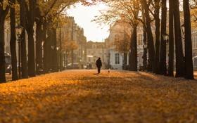 Картинка Bokeh, Nederland, Hague, Autumn day