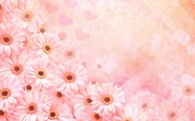 Обои нежные, много, цветы