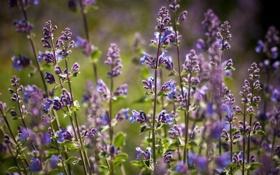 Картинка лето, цветы, фокус, фиолетовые, солнечно, полевые