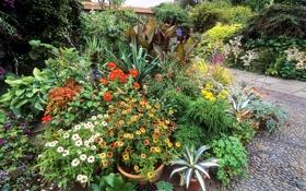 Картинка цветы, сад, дорожка, кусты, бархатцы