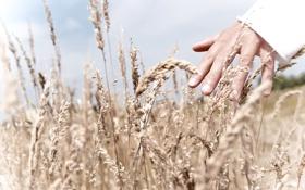 Обои поле, небо, трава, свет, человек, рука, пальцы