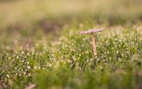 Обои гриб, трава, макро