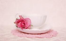 Обои цветок, роза, rose, натюрморт, flower, still life