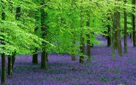 Обои лес, деревья, цветы