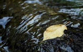 Картинка осень, вода, макро, листок, рябь