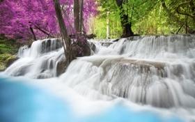 Обои игра красок, водопад, цветные деревья, вода, дерево
