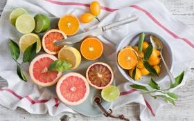 Обои апельсины, лимоны, цитрусовые, Anna Verdina, лаймы