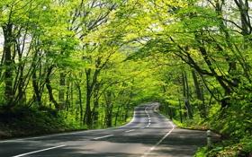 Картинка дорога, зелень, асфальт, деревья, листва, вьётся