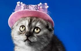 Обои кошка, взгляд, фон, шляпка