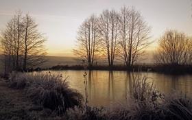 Картинка поле, пруд, утро