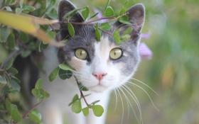 Картинка лето, глаза, кот, взгляд, кошак