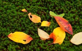 Картинка осень, листья, мох, растения