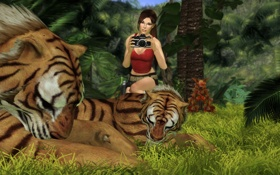 Обои трава, хищники, фотоаппарат, тигры, nikon, Lara Croft, Tomb raider