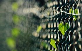 Обои листья, сетка, забор, растение, фокусировка