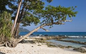Обои песок, рифы, побережье, горизонт, деревья, океан, горы