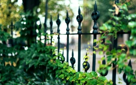 Обои листья, макро, природа, забор, ограда, ограждение, зеленые